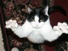 killerhousecat