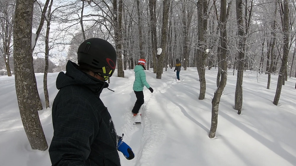 TREE RUN FUN IN THE YUNOMINE AREA