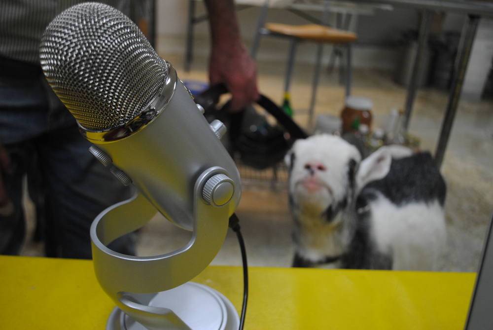 Hope, the blind goat, participates in the interview