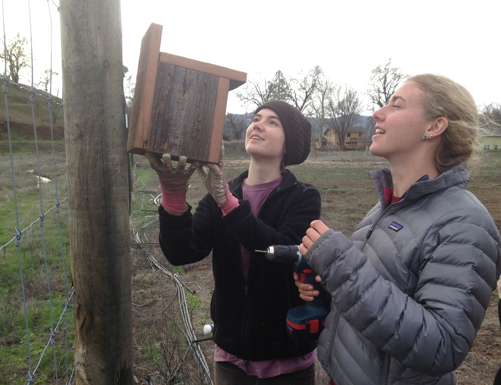 Putting up bird boxes