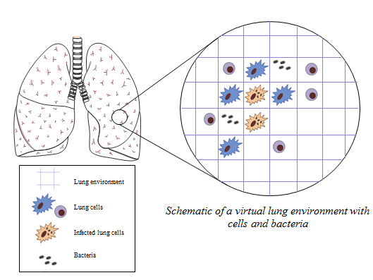 A representative illustration of a virtual lung, used to study tuberculosis. Image Source: Hailey Warsinke