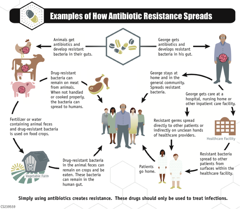 How antibiotic resistant bacteria can spread between humans and agriculture. Image Source