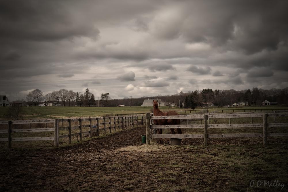 the_farm.jpg