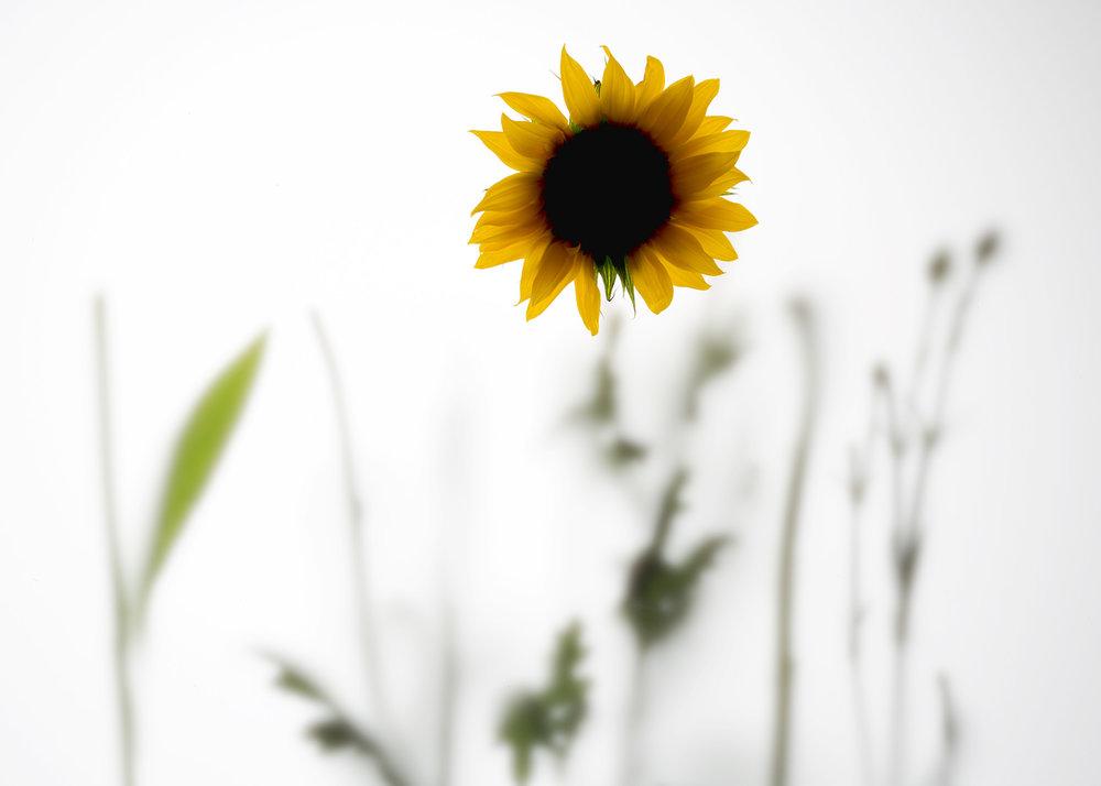 Flower power11270.jpg