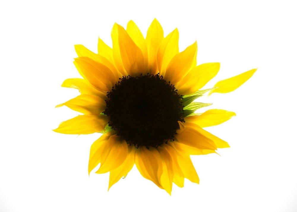 Flower power11248.jpg