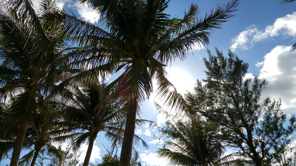 coconut trees say it all