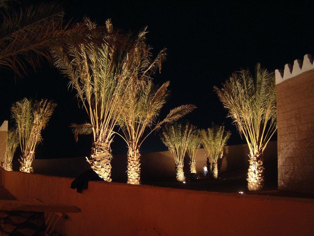 DSCF0603 Palm grove lit.JPG