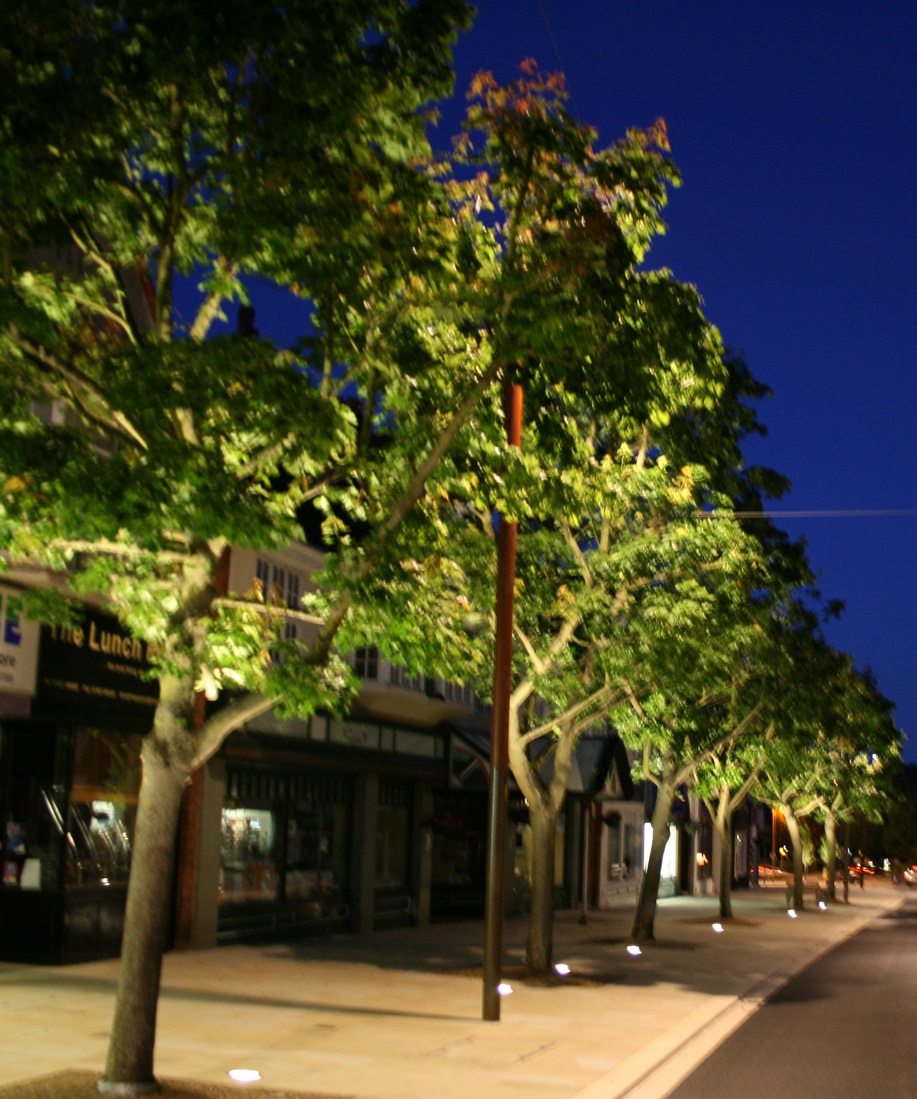 An example of up-lighting trees - an idea we have put forward as part of our lighting scheme for Leighton Buzzard's High Street.