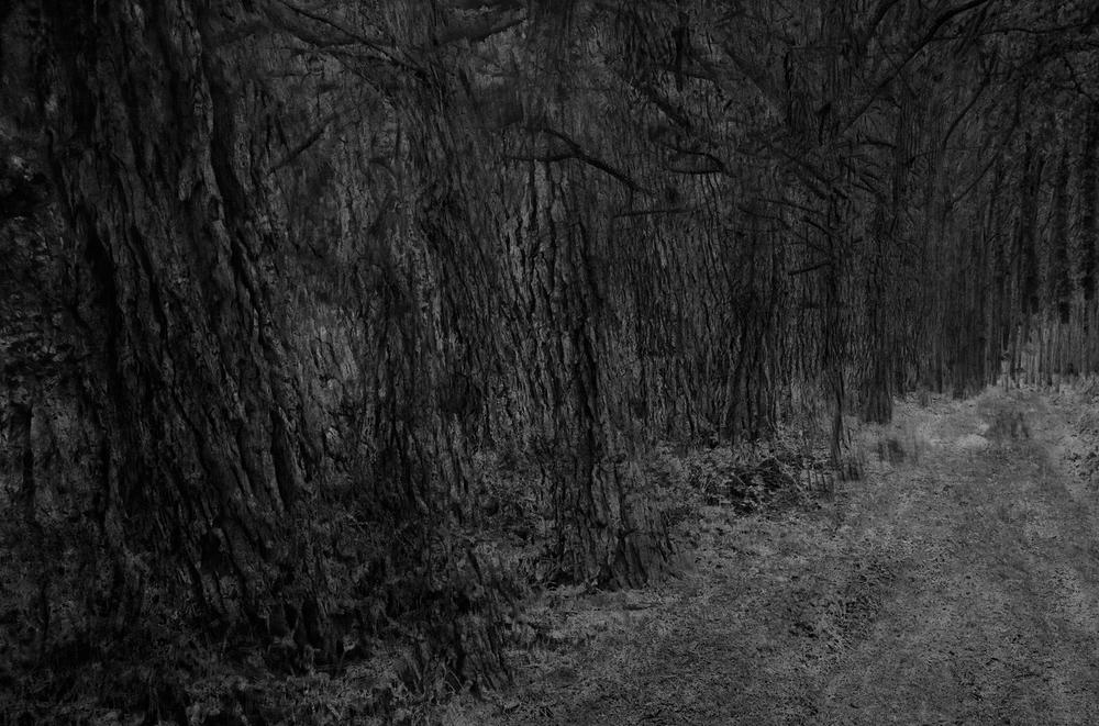 Tree lined track, dusk 3x2.jpg