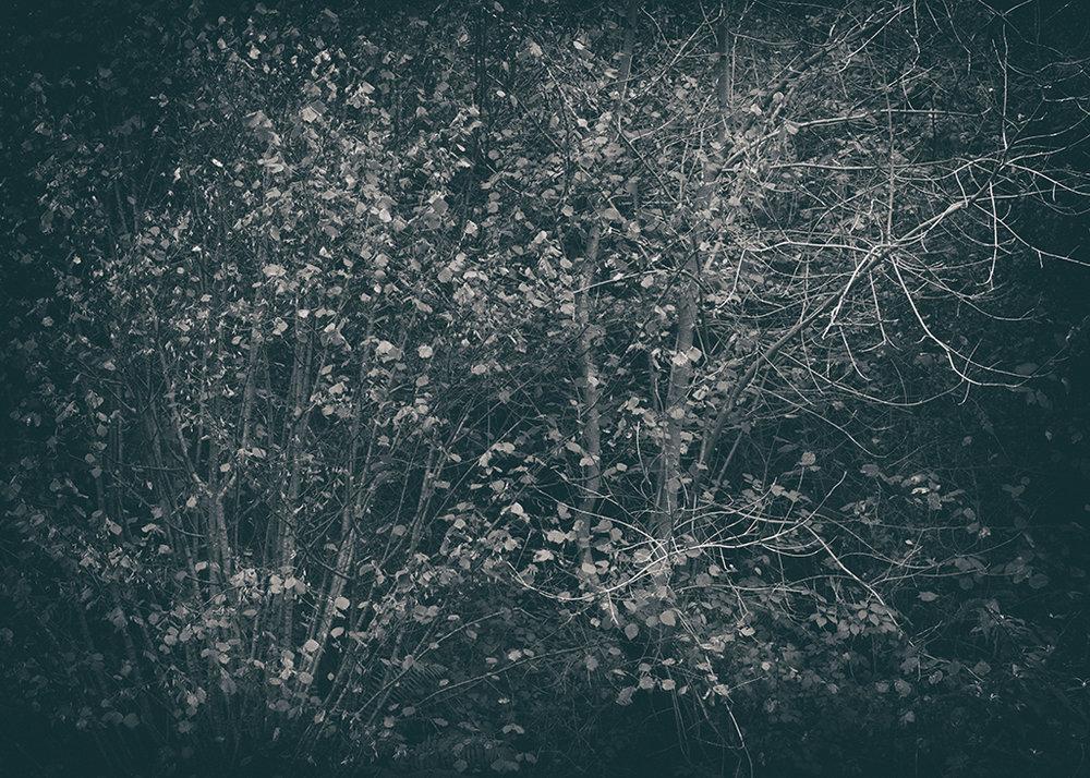 The Secret Language of Trees Week 4 October_20171028_0035BW toned.jpg