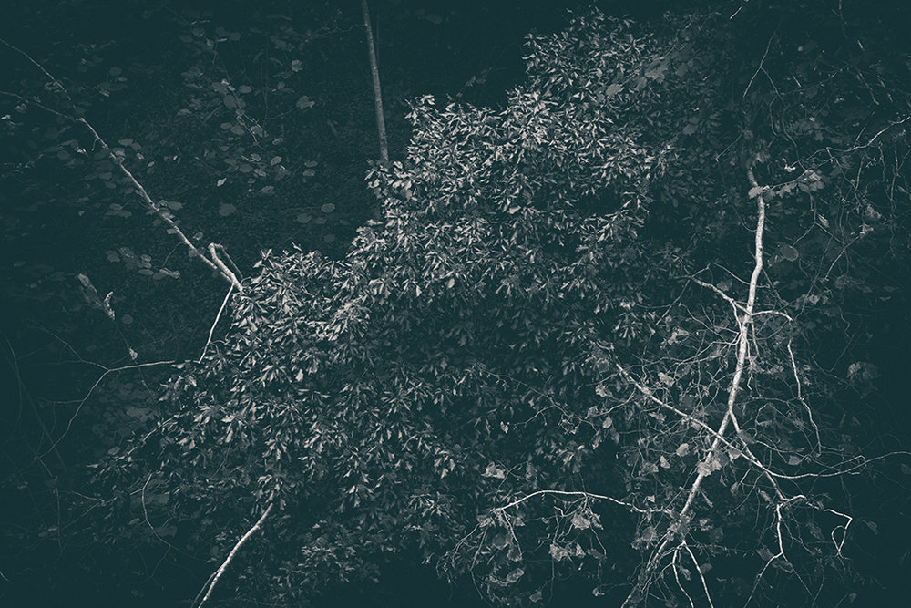 The Secret Language of Trees Week 4 October_20171028_0044_1BW toned.jpg