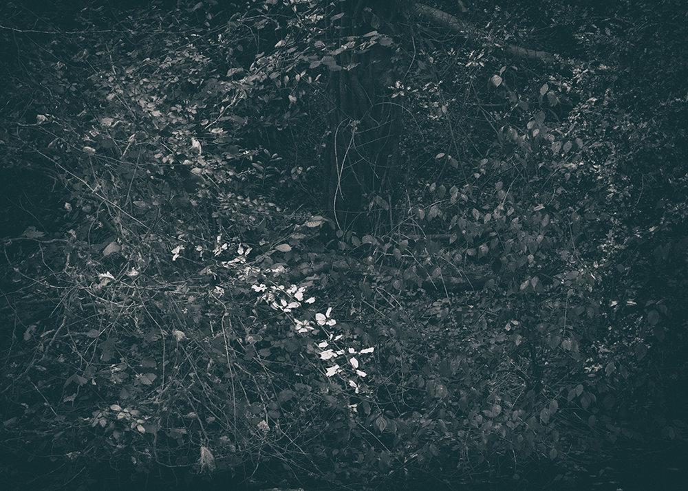 The Secret Language of Trees Week 4 October_20171028_0039BW toned.jpg