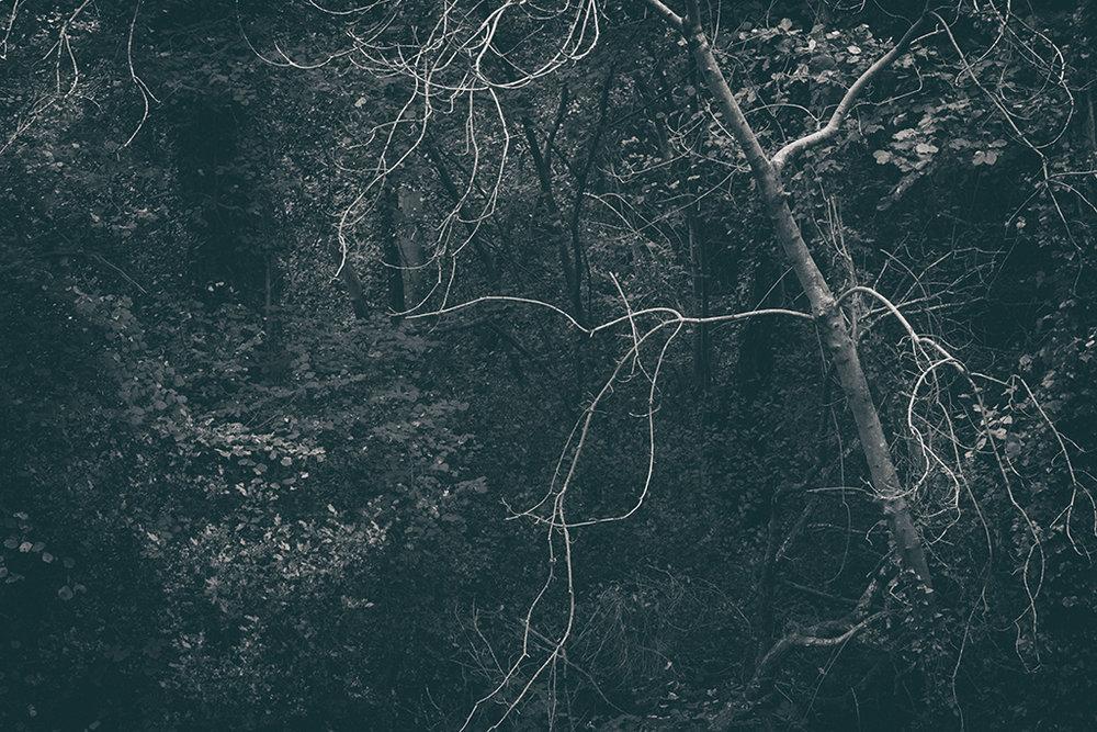 The Secret Language of Trees Week 4 October_20171028_0048_1BW toned.jpg