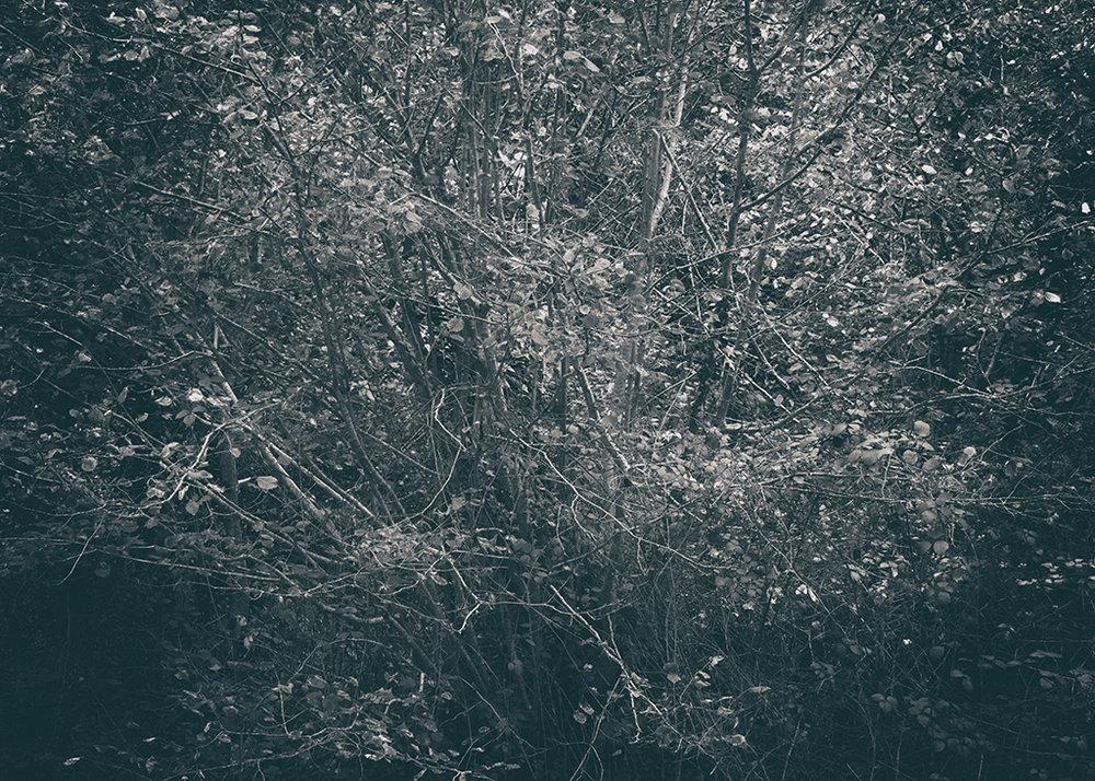The Secret Language of Trees Week 4 October_20171028_0057BW toned.jpg