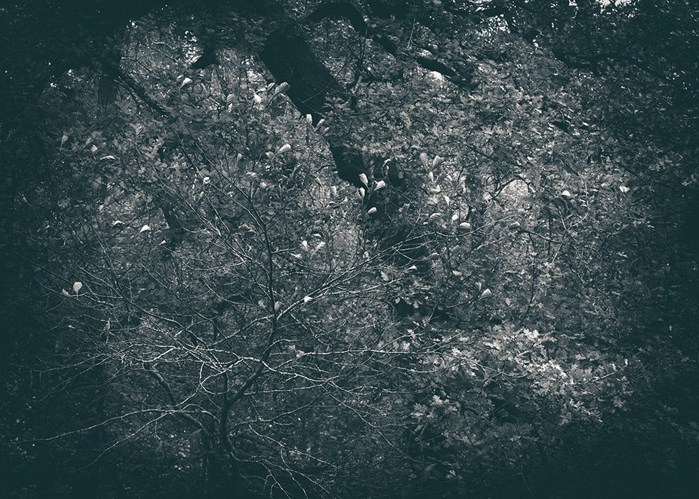 The Secret Language of Trees Week 4 October_20171028_0064_1BW toned.jpg