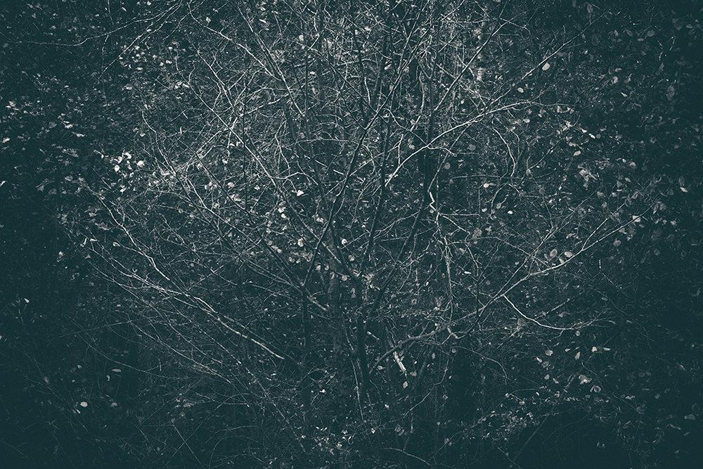 The Secret Language of Trees Week 4 October_20171028_0066_1BW toned.jpg