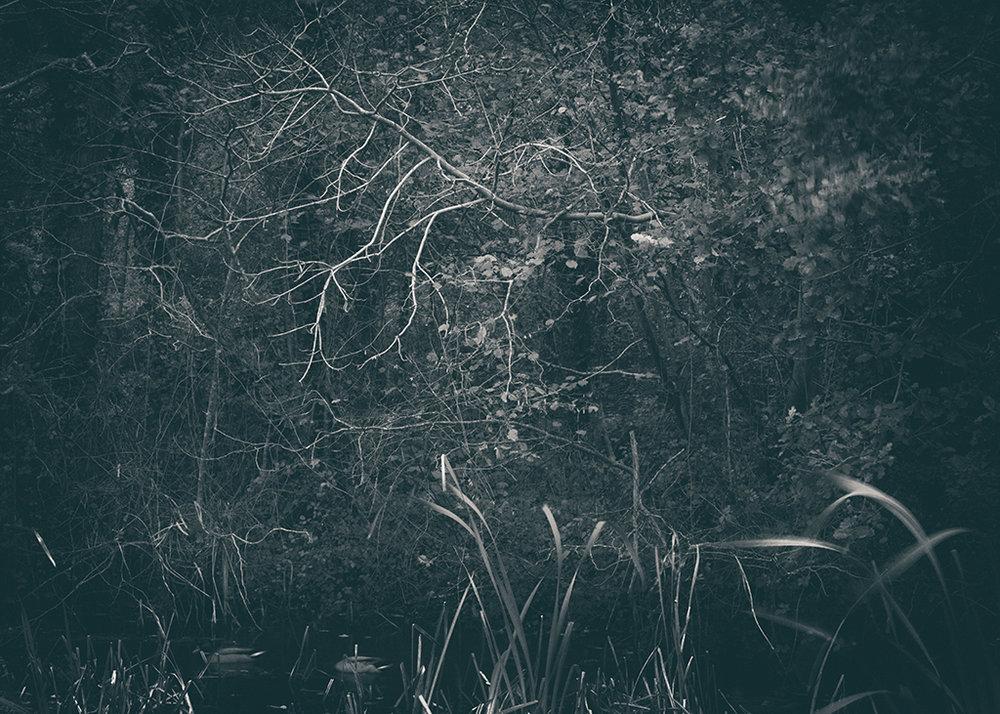 The Secret Language of Trees Week 4 October_20171028_0110_1BW toned.jpg