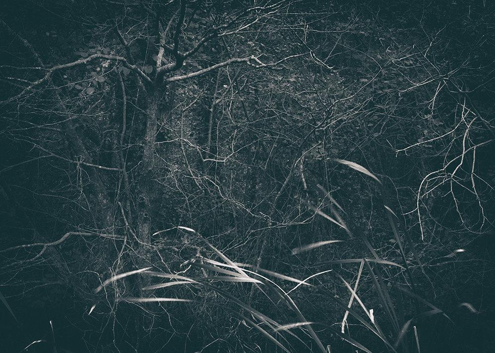 The Secret Language of Trees Week 4 October_20171028_0116_1_1BW toned.jpg