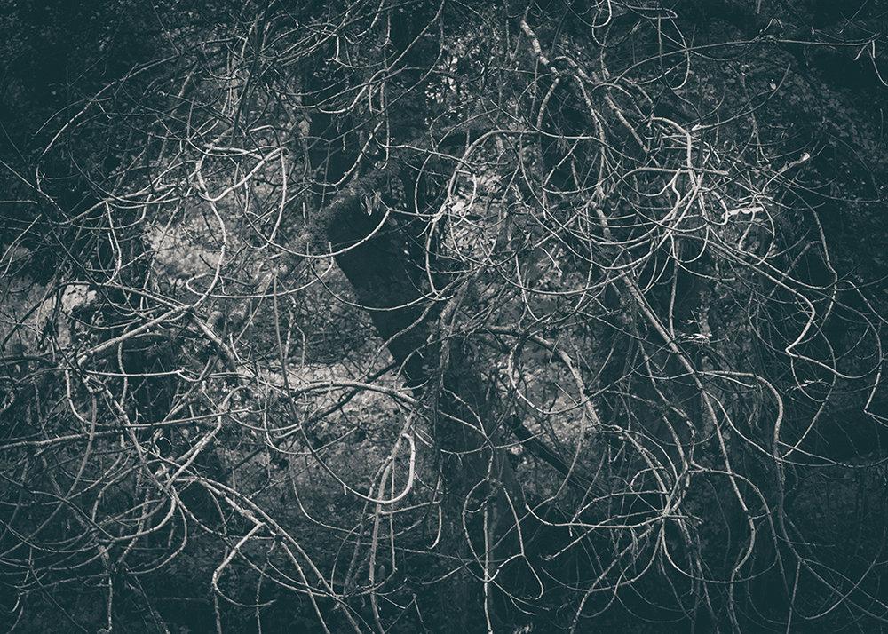 The Secret Language of Trees Week 4 October_20171028_0131_1BW toned.jpg