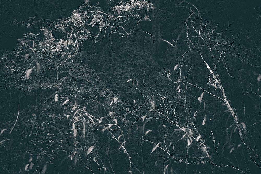 The Secret Language of Trees Week 4 October_20171028_0188BW toned.jpg