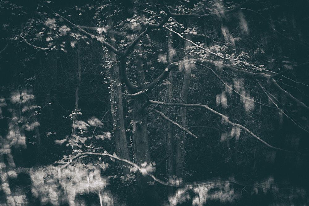 The Secret Language of Trees Week 4 October_20171028_0194BW toned.jpg