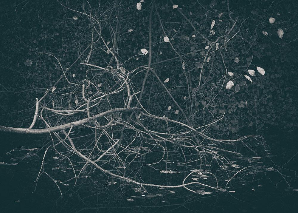 The Secret Language of Trees Week 5 October_20171102_0001BW toned.jpg