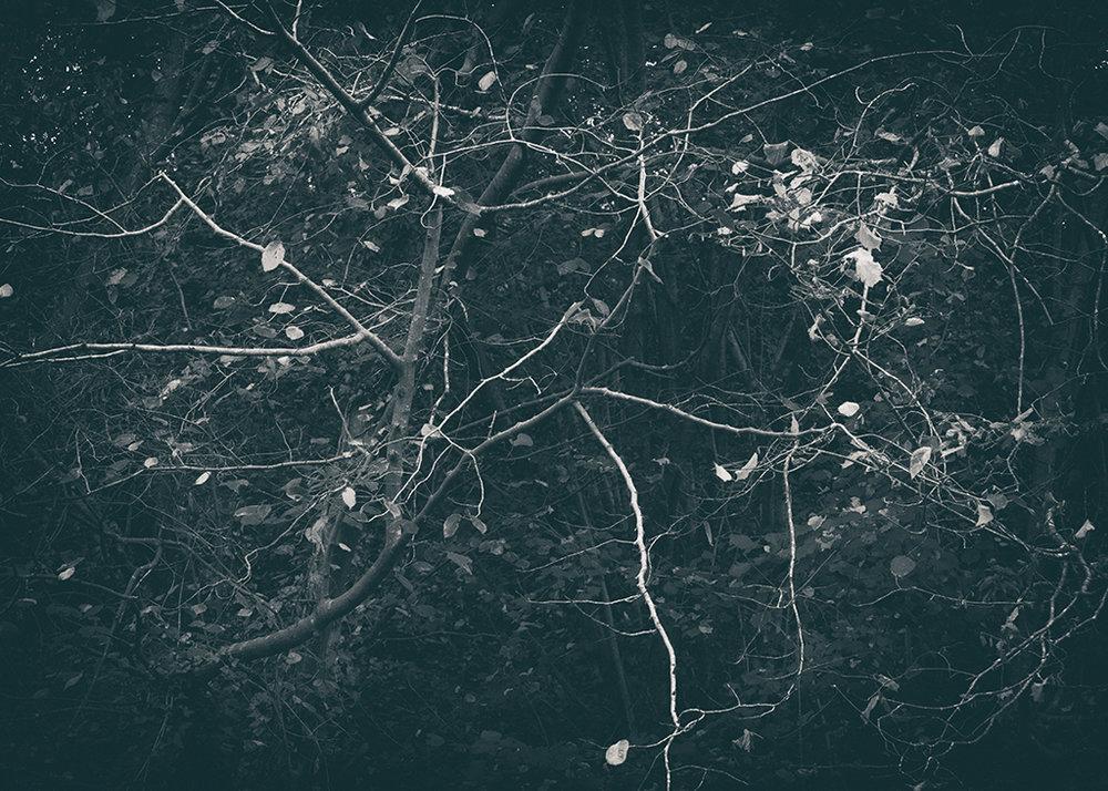 The Secret Language of Trees Week 5 October_20171102_0004_1BW toned.jpg