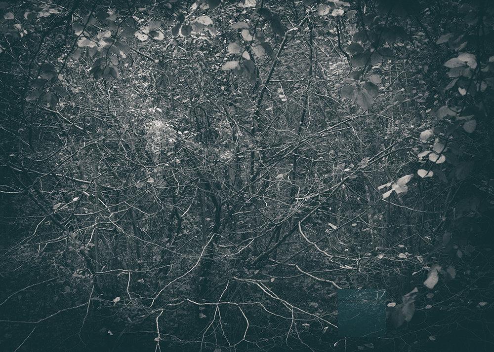 The Secret Language of Trees Week 5 October_20171102_0014_1BW toned.jpg
