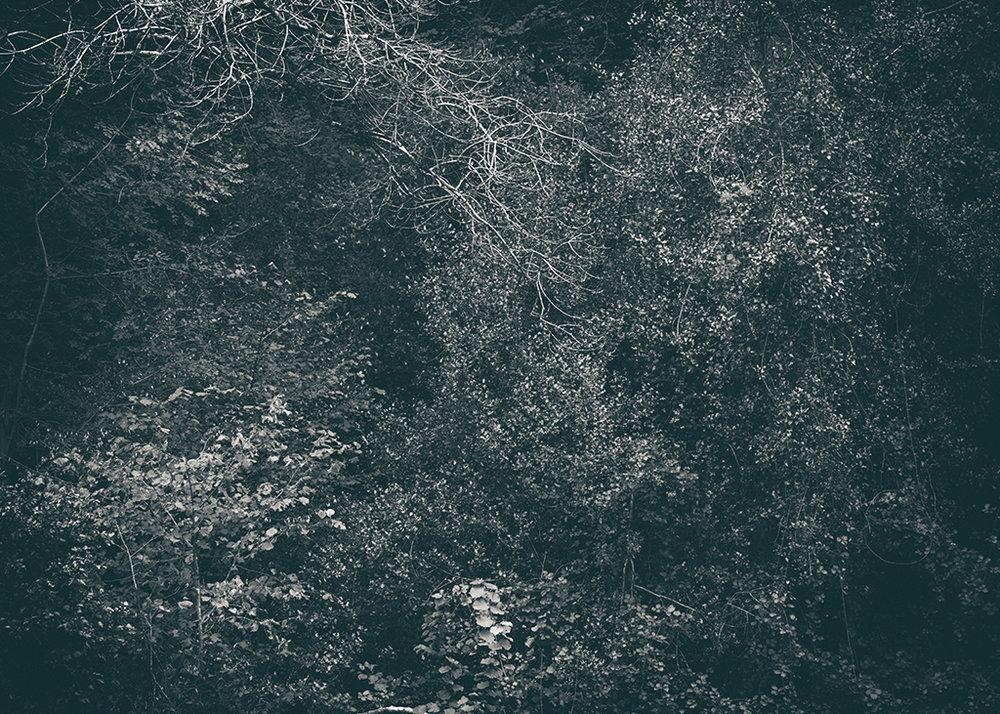 The Secret Language of Trees Week 5 October_20171102_0006_1BW toned.jpg