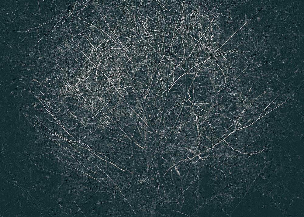 The Secret Language of Trees Week 5 October_20171102_0015BW toned.jpg