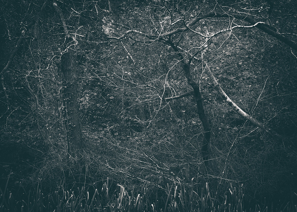 The Secret Language of Trees Week 5 October_20171102_0024_1BW toned.jpg