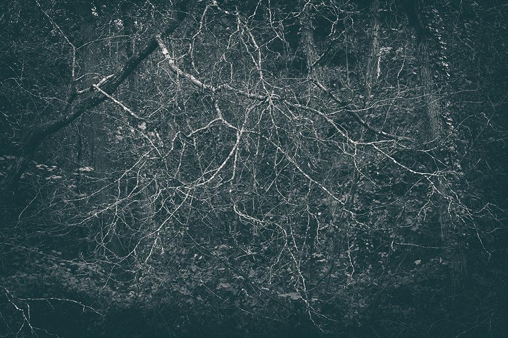 The Secret Language of Trees Week 5 October_20171102_0026_1BW toned.jpg