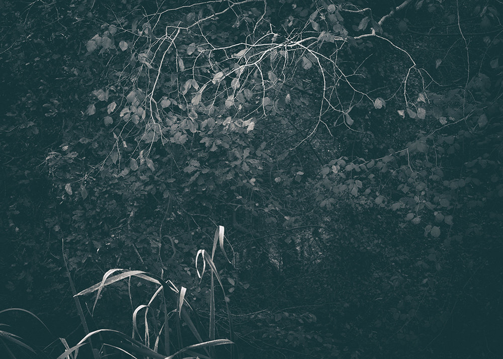 The Secret Language of Trees Week 5 October_20171102_0027_1BW toned.jpg