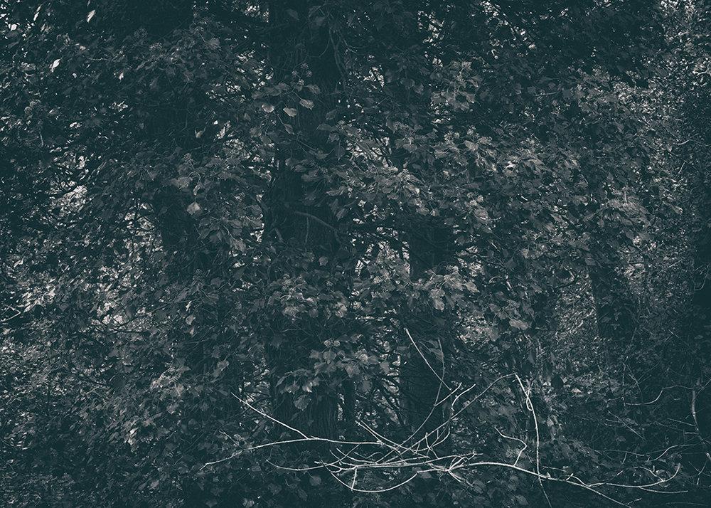 The Secret Language of Trees Week 5 October_20171102_0044_1BW toned.jpg
