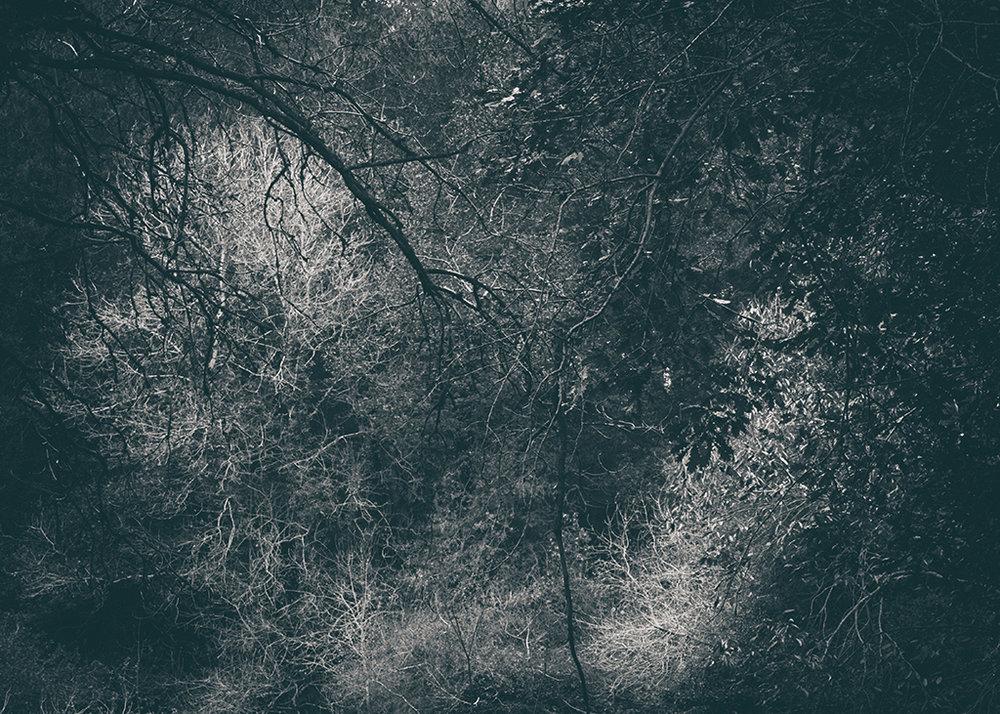 The Secret Language of Trees Week 5 October_20171102_0048_1BW toned.jpg