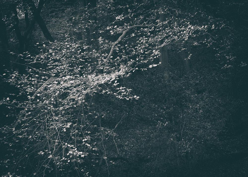 The Secret Language of Trees Week 5 October_20171102_0053BW toned.jpg