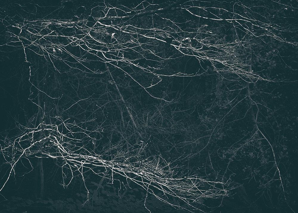 The Secret Language of Trees Week 5 October_20171102_0055_1BW toned.jpg
