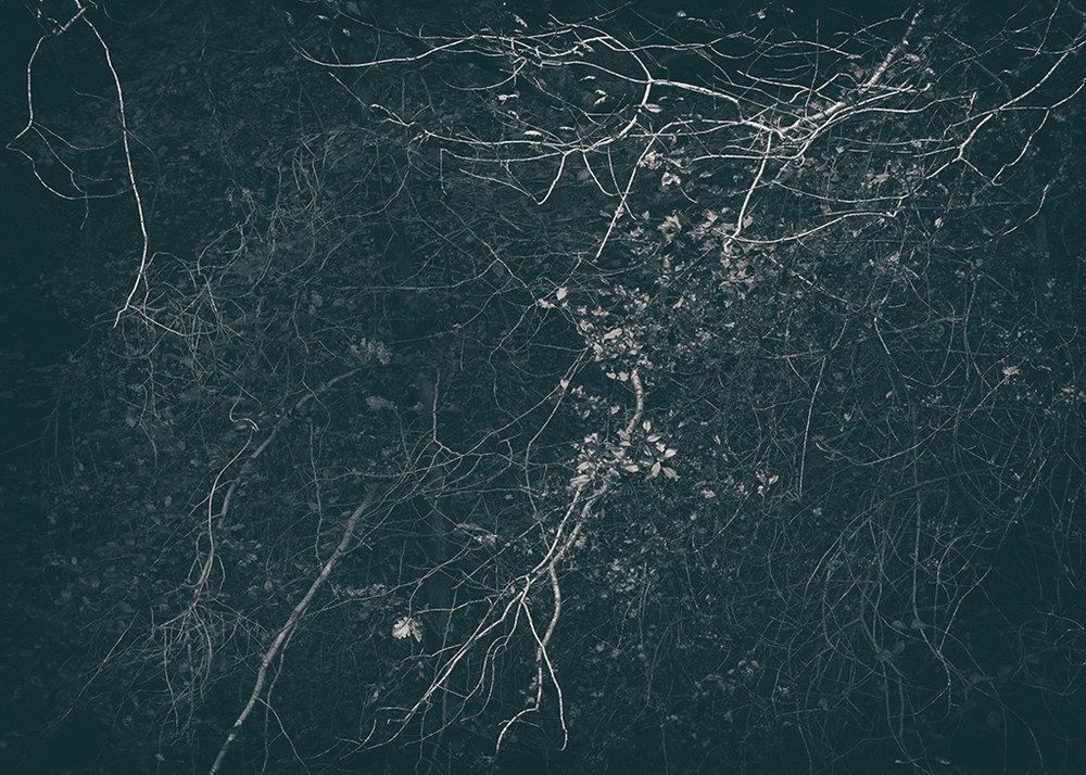 The Secret Language of Trees Week 5 October_20171102_0056BW toned.jpg