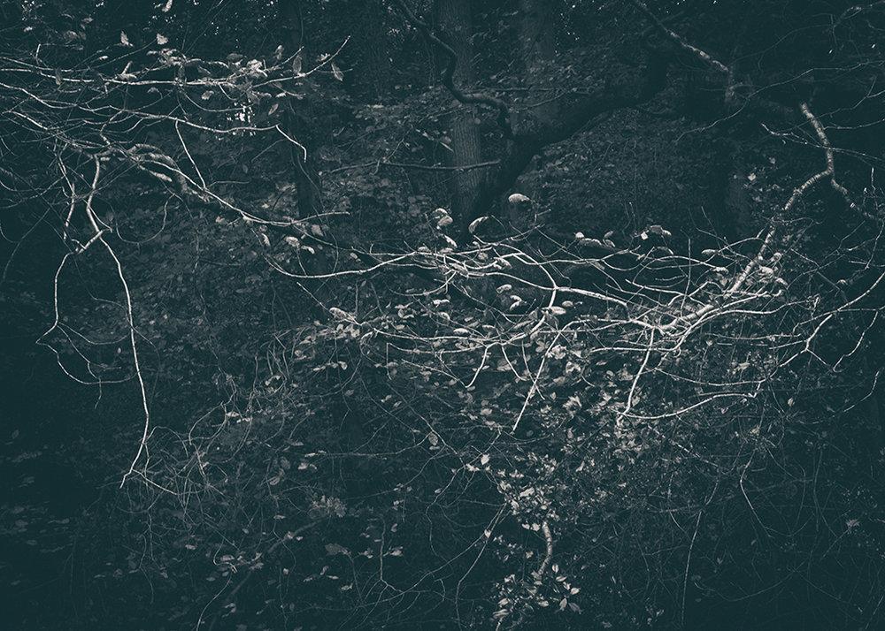 The Secret Language of Trees Week 5 October_20171102_0057BW toned.jpg