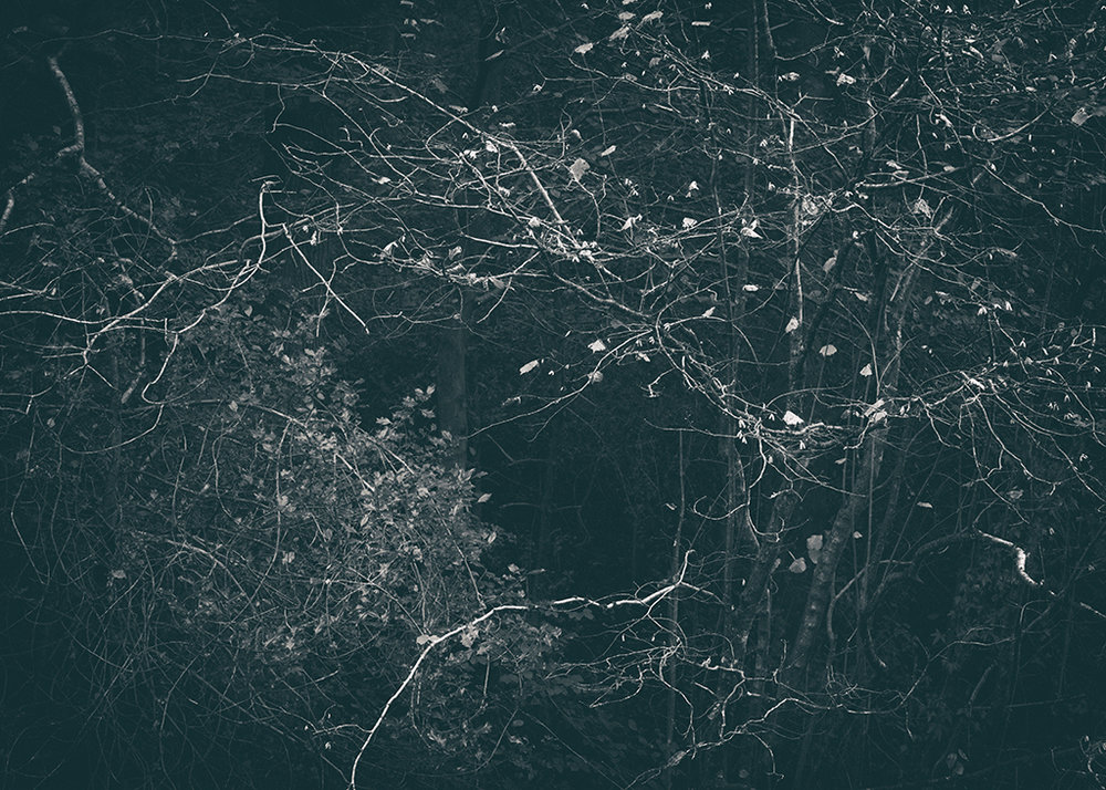 The Secret Language of Trees Week 5 October_20171102_0082_1BW toned.jpg