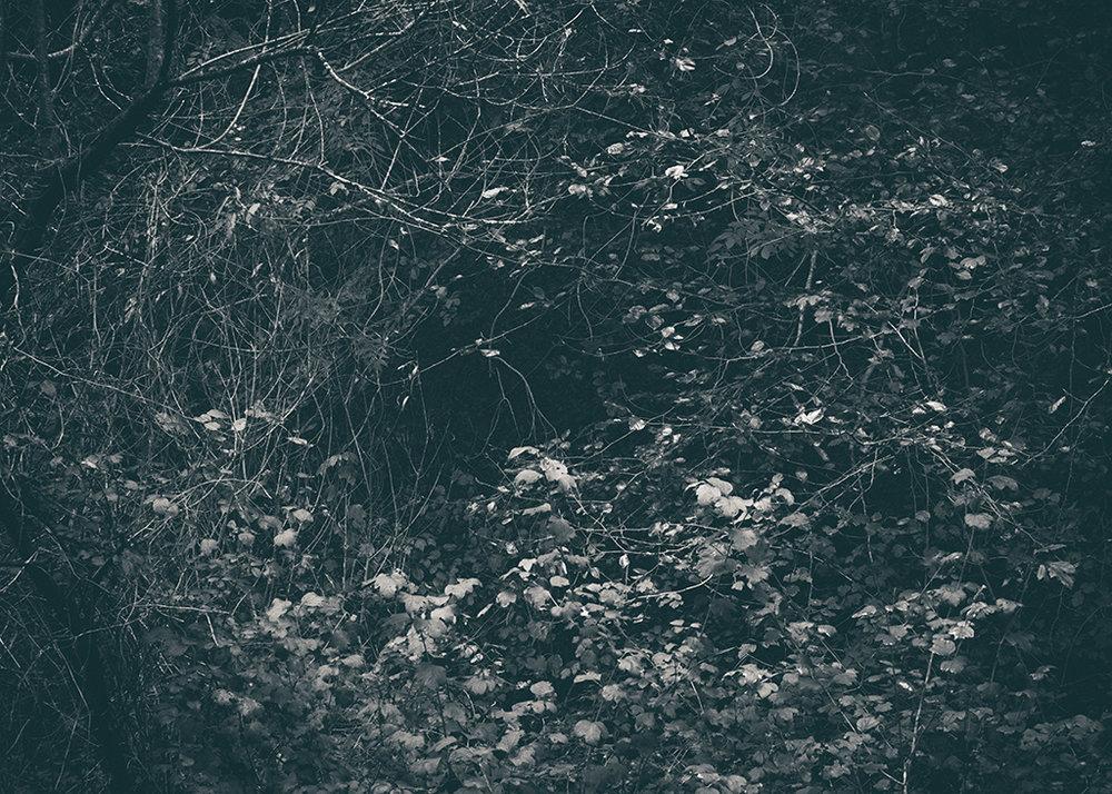 The Secret Language of Trees Week 5 October_20171102_0066_1BW toned.jpg
