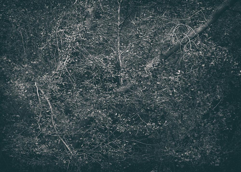 The Secret Language of Trees Week 5 October_20171102_0097BW toned.jpg