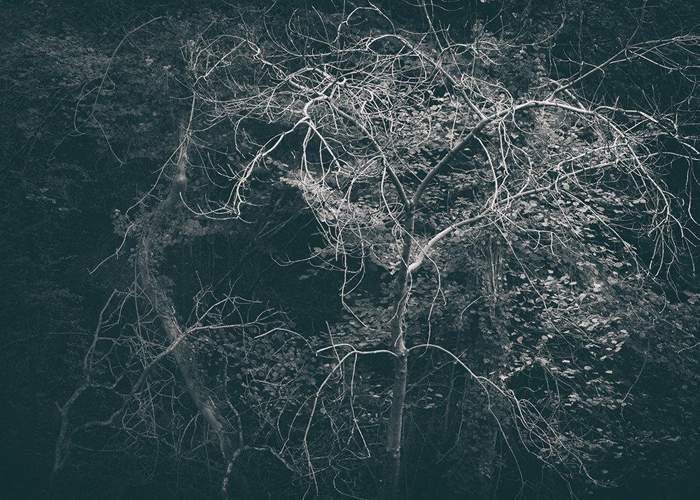 The Secret Language of Trees Week 5 October_20171102_0103_1BW toned.jpg