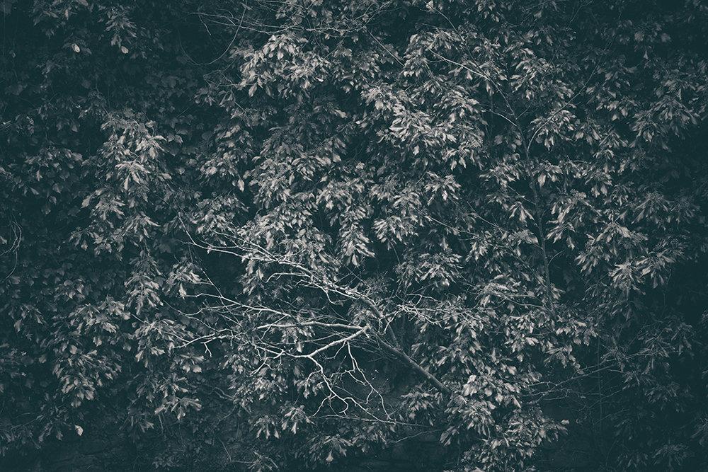 The Secret Language of Trees Week 5 October_20171102_0107_1BW toned.jpg