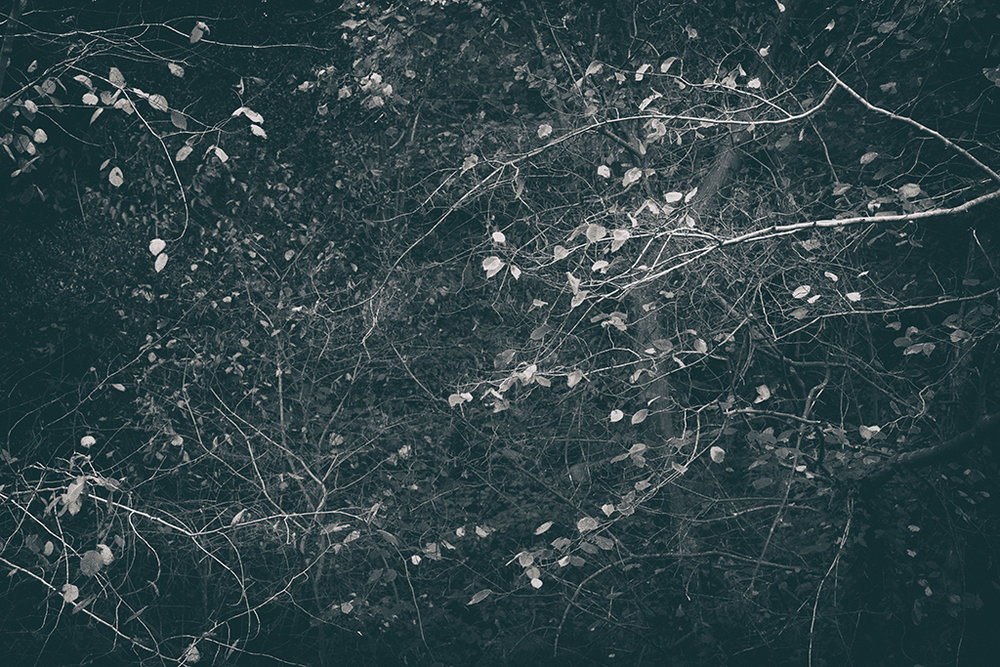 The Secret Language of Trees Week 6 November_20171109_0005BW toned.jpg
