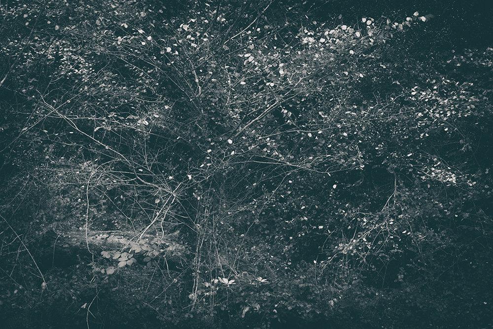 The Secret Language of Trees Week 6 November_20171109_0008_1BW toned.jpg