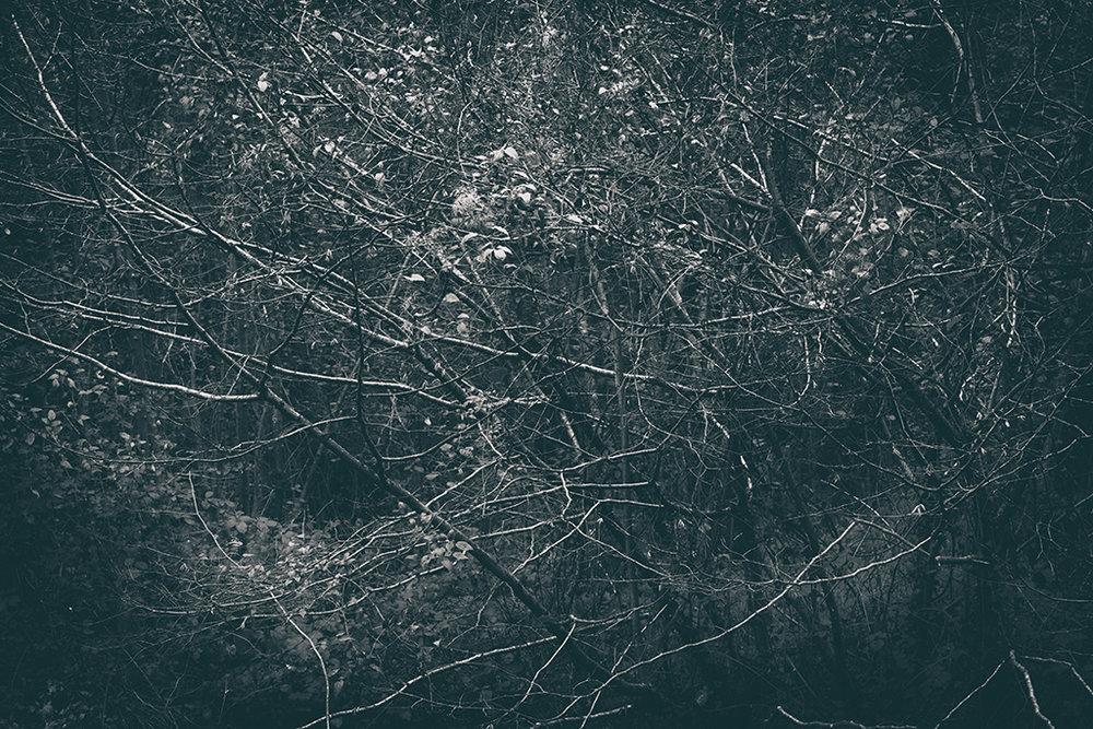 The Secret Language of Trees Week 6 November_20171109_0017BW toned.jpg
