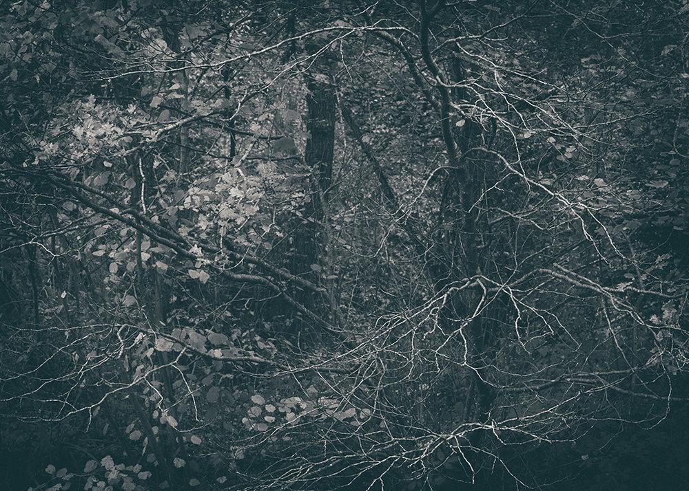 The Secret Language of Trees Week 6 November_20171109_0019_1BW toned.jpg