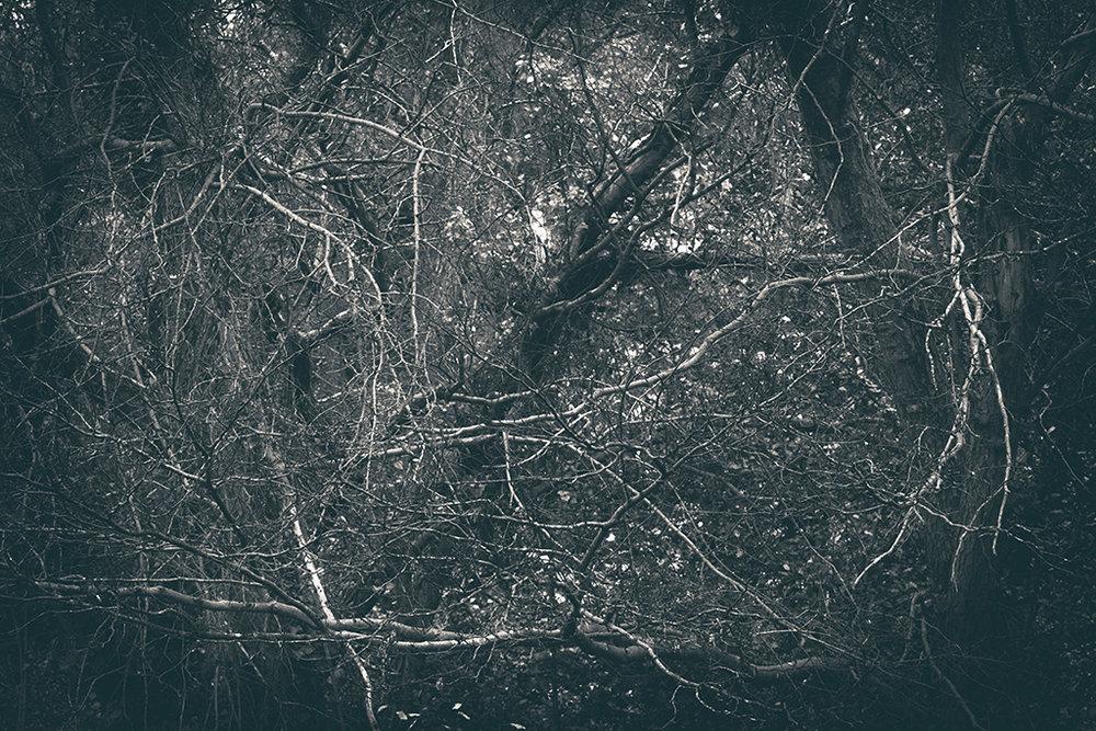 The Secret Language of Trees Week 6 November_20171109_0020_1BW toned.jpg