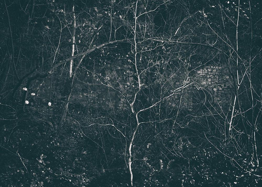 The Secret Language of Trees Week 8, November_20171123_0003BW toned.jpg